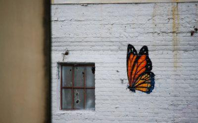 Bye Bye Butterflies